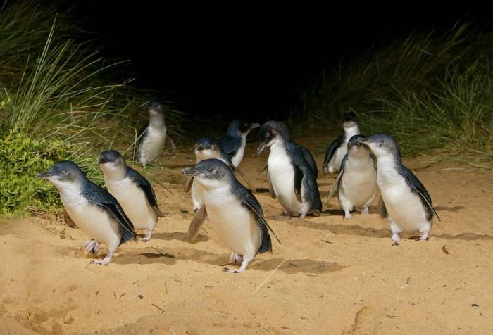 penguin-2-700x476