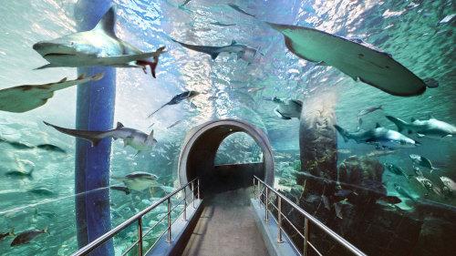 Sea Life Melbourne Aquarium (Share youradventure)