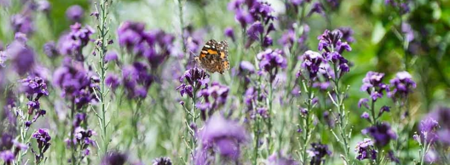 Bendigo Botanic Gardens (share youradventure)